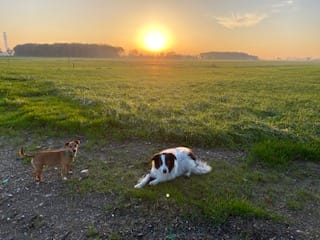 De honden met de zon op Zorgboederij Boerewille