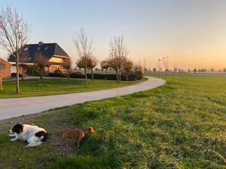 De honden Zorgboerderij Boerewille