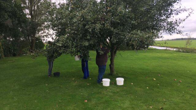 Dagbesteding Zorgboerderij Friesland Boerewille