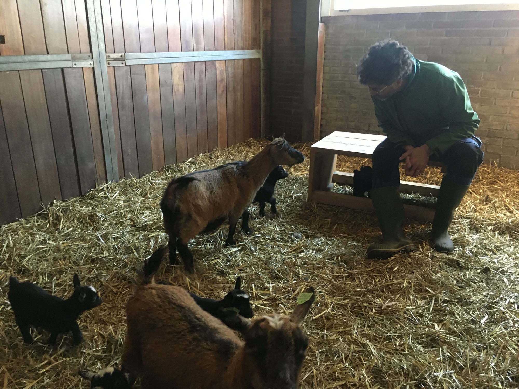 Dieren op zorgboerderij Boerewille